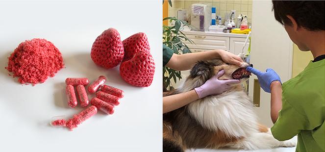 動物用医薬品イヌ歯肉炎軽減剤「インターベリーα」